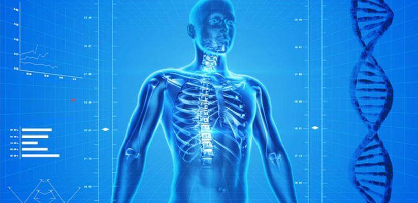 Հետաքրքրաշարժ փաստեր մեր մարմնի մասին։ Մաս 1
